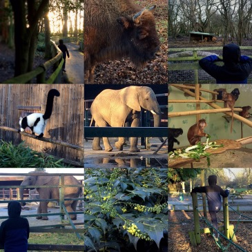 Out & about with Penguin: Howletts Wild Animal Park - Sensational Learning with Penguin #autistic #fieldtrip #homeed #homeschool #learningdifferences #