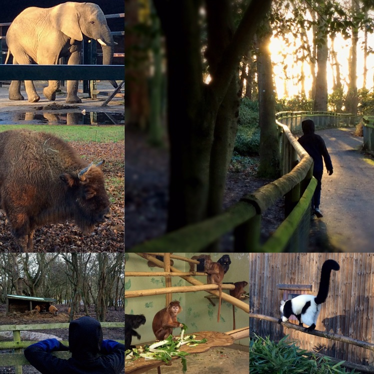 Howletts January 2018 - Sensational Learning with Penguin