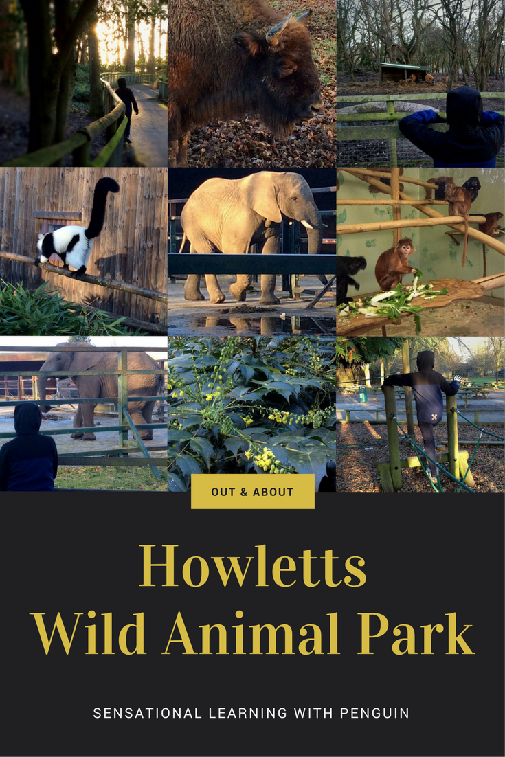 Out & About with Penguin - Howletts Wild Animal Park - Sensational Learning with Penguin #autism #daysout #elephants #homeed #homeschool #learningdifferences #Kent
