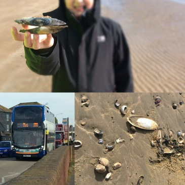 Back to the Beach, by Bus! - Sensational Learning with Penguin