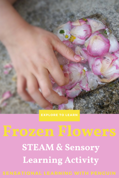 Frozen Flowers: An Early Learning STEAM & Sensory Activity. Learn about Liquid and Solid Forms, as well as Flowers and their Names, while exploring Colours, Scents, Temperatures, Tactile Sensations and more. A post from sensationallearningwithpenguin.com