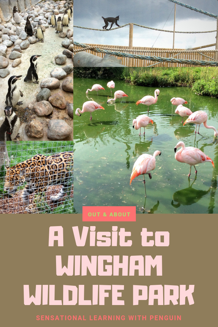 Wingham Wildlife Park in Kent (UK) has a great selection of animals from all over the world, as well as a 'Dinosaur Zoo' and good play areas for the kids. We went there at the end of summer 2018, mainly in the search for flamingoes, and had a great day out - Sensational Learning with Penguin