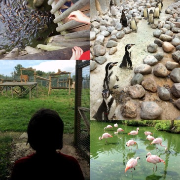A Visit to Wingham Wildlife Park - Sensational Learning with Penguin