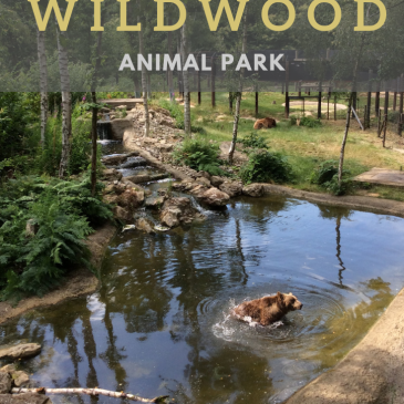 Days Out in the South East: Wildwood Trust Animal Park #daysoutwithkids #exploretolearn #wildlife #Britain #homeschooling #animalparks
