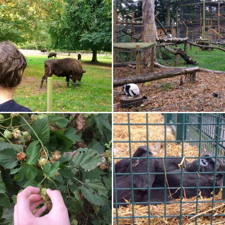 A Visit To Howletts Animal Park & A Simple Follow-Up Activity
