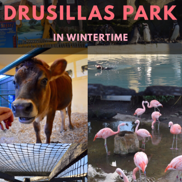 Days Out in the South East: Visiting Drusillas Park in Wintertime! #FamilyDaysOut #ExperientialLearning #Sussex