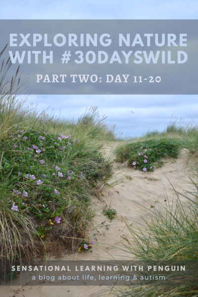 Exploring Nature With #30DaysWild, Part Two: Day 11-20, on sensationallearningwithpenguin.com. Outdoorsy fun & learning with my nonverbal autistic teenager with learning differences. #homeschooling #beachschooling #experientiallearning #multisensorylearning