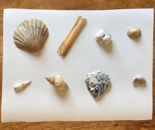 Seashells without names