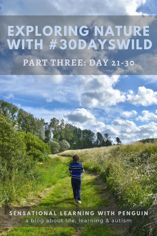 Exploring Nature with #30DaysWild, part 3. http://sensationallearningwithpenguin.com - a blog about Life, Learning & Autism